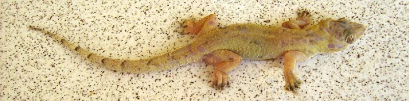 ...почему Selenium для работы с Firefox начал требовать geckodriver?